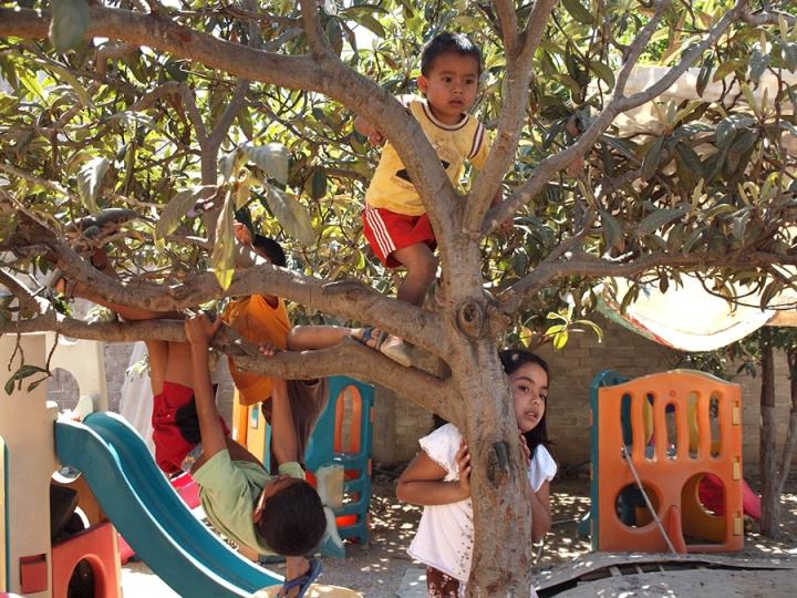 En el patio del Hogar hay un montón de juguetes, resbaladeras, un parque al aire libre. Pero lo que más atrae a los niños son los árboles, en los cuales se trepan y ponen a prueba sus destrezas, y desarrollan juntos sus capacidades y espíritus libres.